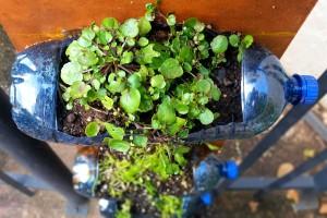 gardenns